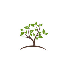 plant green tree leaf botany logo vector image