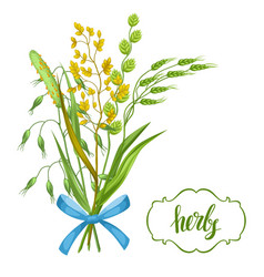 Bouquet with herbs and cereal grass floral design vector