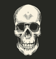 human skull drawn in retro etching style isolated vector image