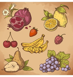 Icon fruits retro vector