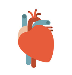 Colorful silhouette without contour heart system vector