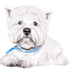 Dog west highland white terrier breed vector