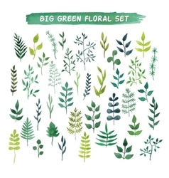 watercolor floral set Big green floral vector image vector image