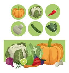 vegetables fresh raw ingredients vector image