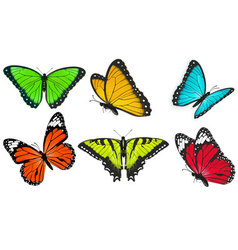 Set of realistic bright and colorful butterflies vector