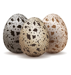 Three quail eggs vector image vector image