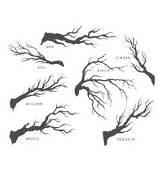 Set of dried branches of trees vector