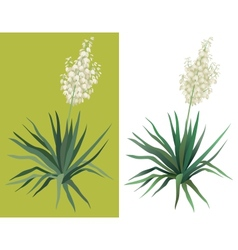 Flowering plant Yucca vector image vector image