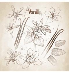 Graphic vanilla flowers vector