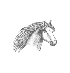 Horse head sketch of purebred arabian mare vector