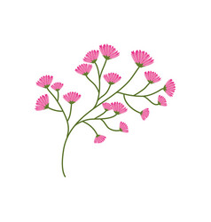 flourishes branch spring image vector image