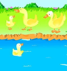 Ducks in the river vector