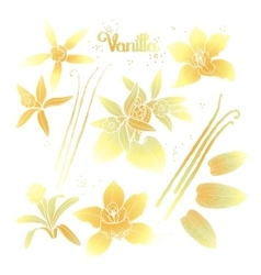 Graphic vanilla flowers vector