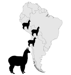 Alpaca range map vector image