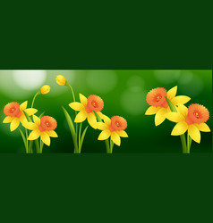 Background scene with daffodil flowers vector