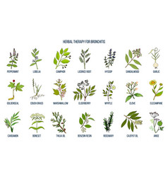 Herbal therapy for bronchitis vector