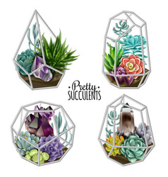 Succulents and crystals vector