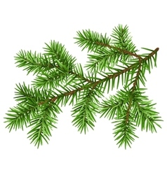 Pine tree branch green fluffy pine branch vector