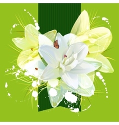 Flower white lily for greeting card vector
