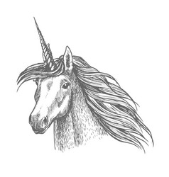 unicorn magic horse head sketch vector image