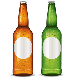 beer bottle blank package design vector image vector image