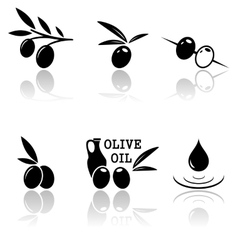 set of olive icons vector image