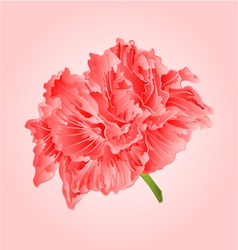 Tropical flower pink hibiscus blossom simple vector