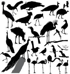 Bird silhouette set vector
