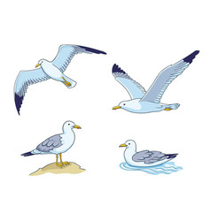 Seagulls - flying sitting and swimming vector