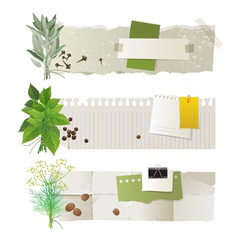 Herbal banners vector