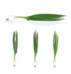Green onion on a white background vector