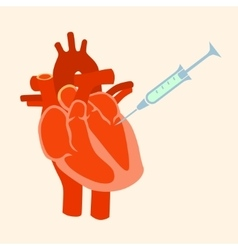 The human heart with a syringe vector