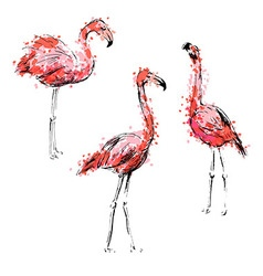 Colored hand drawing flamingos vector image vector image