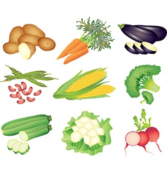 vegetables popular set vector image vector image