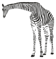 Giraffe in the Zebra camouflage vector image