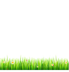 green natural grass border with white daisies vector image vector image