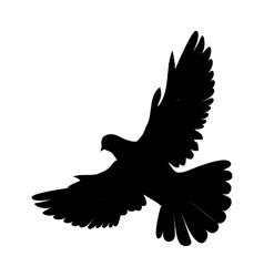 Pigeon Flat Design vector image vector image