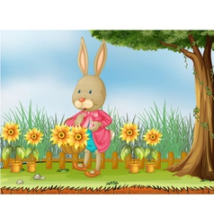 A bunny in the garden with sunflowers vector image