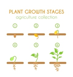 Plant growth stages planting process vector
