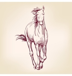 horse hand drawn llustration sketch vector image