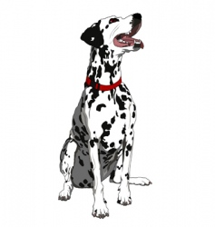 obedient dalmatian vector image vector image