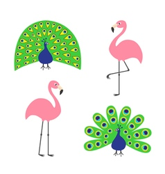 Peacock Pink flamingo set Feather out open tail vector image vector image