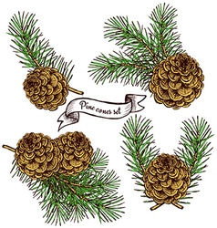 Pine cone set with robbon vector