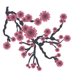 Branch of pink japanese cherry tree on white vector