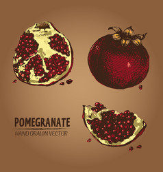 digital detailed color pomegranate hand vector image vector image