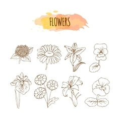 Hand drawn flower set floral vector