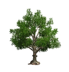 Tree isolated vector