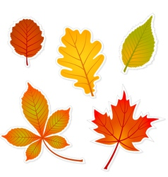 Autumn leaves stickers vector