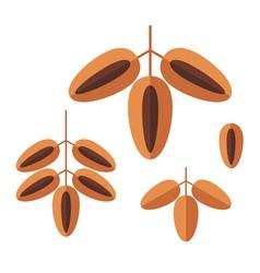 Date Fruit vector image vector image