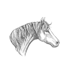 Speedy racehorse of american quarter breed sketch vector image